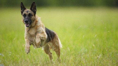 tempor-non-hogod-dog-maximus